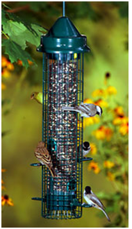 The Ultimate Guide to Squirrel Proof Bird Feeders - Squirrel Proof