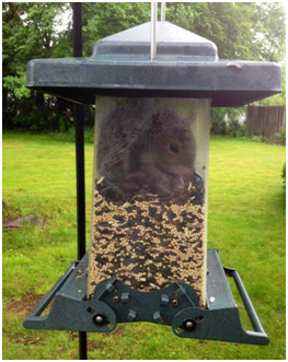 How To Keep Squirrels Out Of Bird Feeders Squirrel Proof