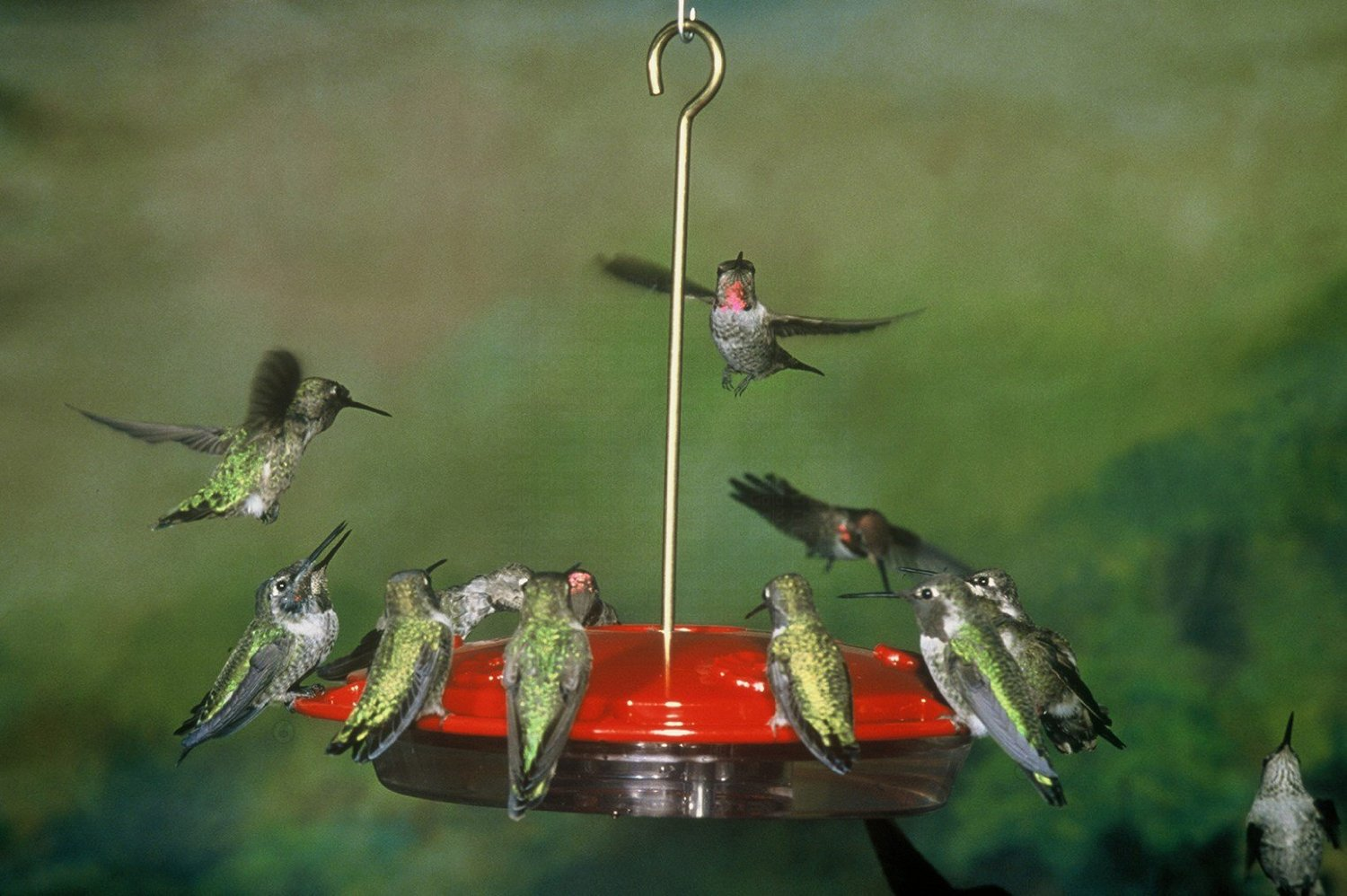 youtube feeder hummingbird watch hanging